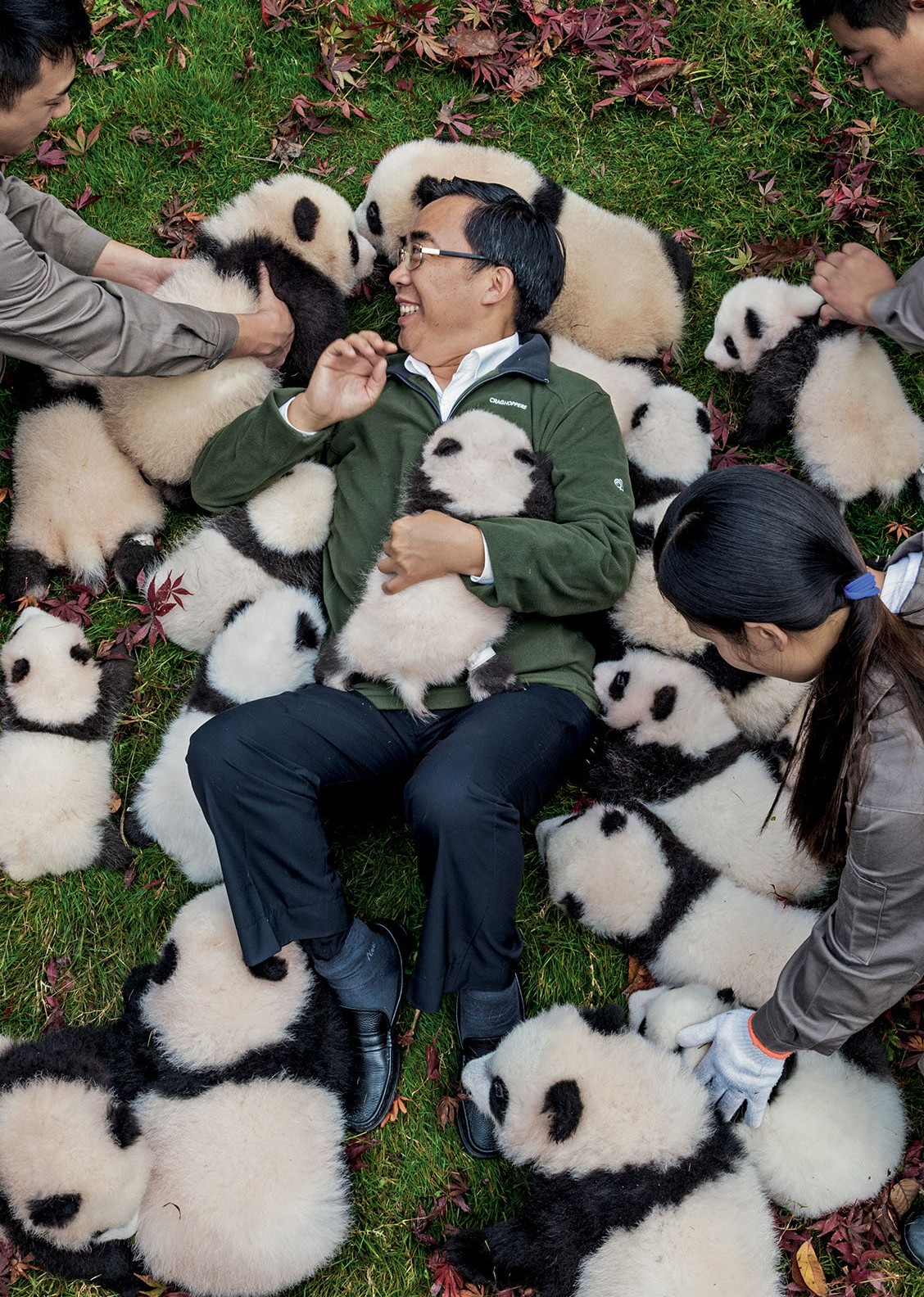 Preparing Pandas In Captivity For Their New Life In The Wild