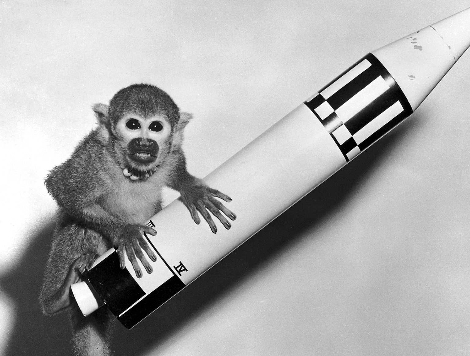 "Space monkey ""Baker,"" pictured here with a model Jupiter Vehicle, rode a Jupiter IRBM into space in 1959. NASA/Marshall Space Flight Center)"