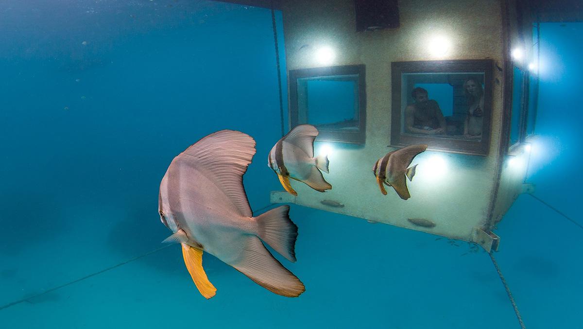 Underwater Room in Zanzibar