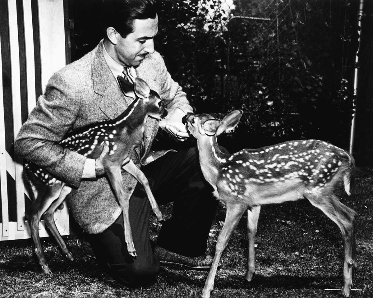 Walt Disney, with animators' models Bambi and Faline, during the filming of Bambi in 1942