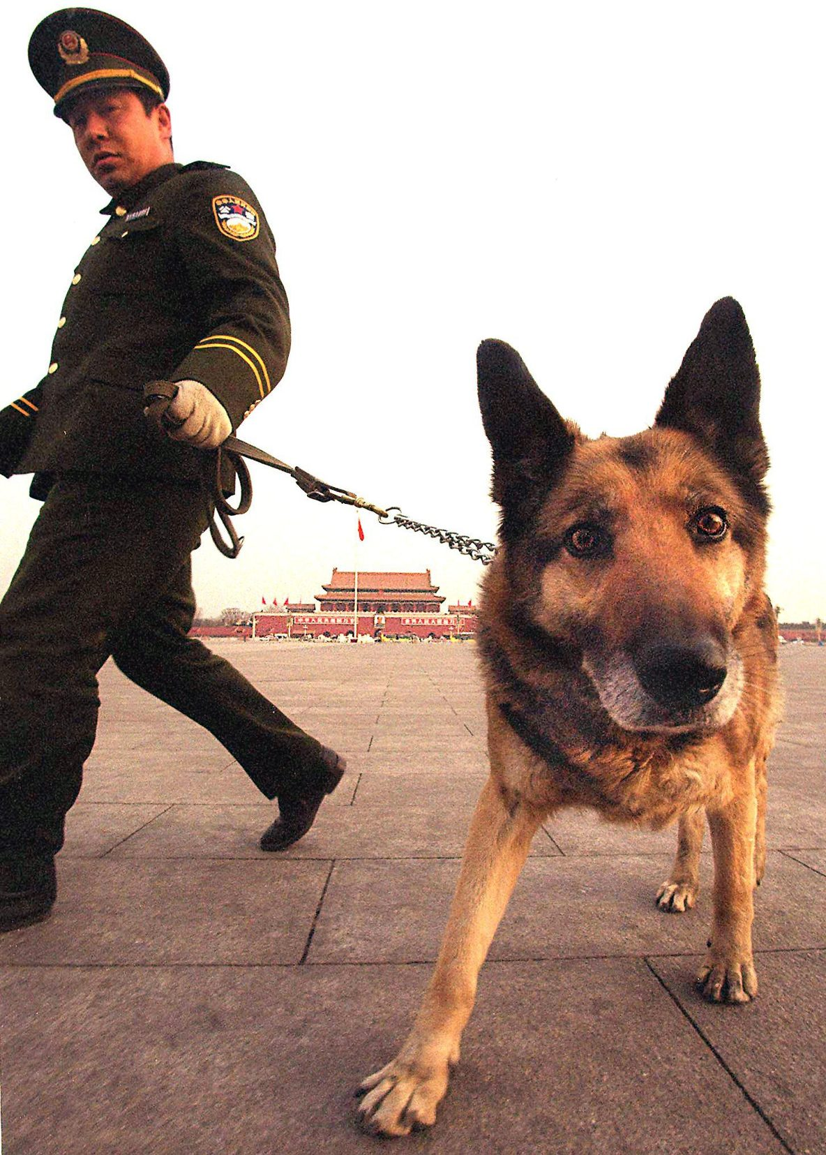 Dogs Remain Man's Best Friend for Sniffing Out Bombs or Drugs