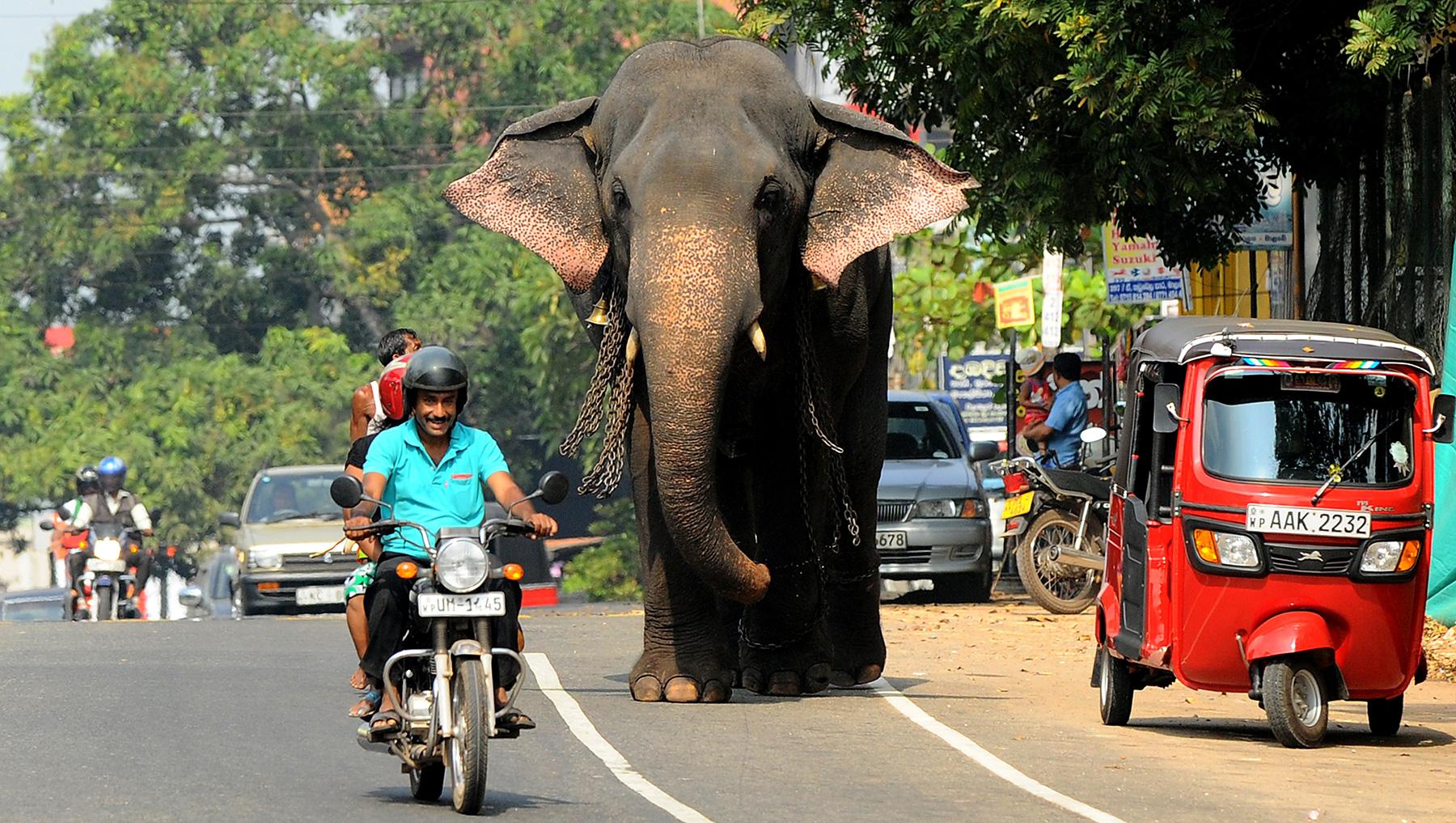 Tour Sri Lanka by Bicycle