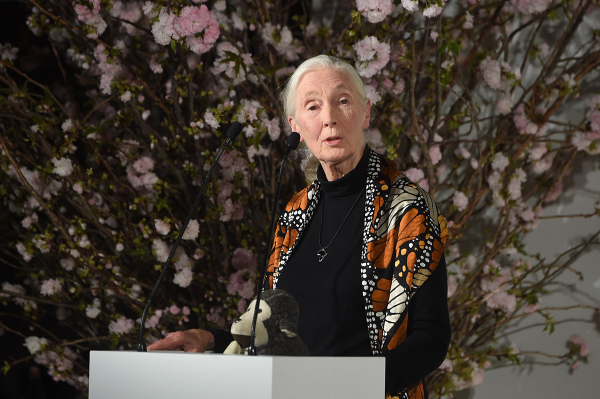 Jane Goodall Has Some Advice for Ivanka Trump