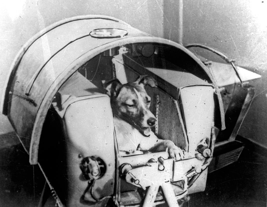 Out of This World: Animals Who Have Been Sent to Space