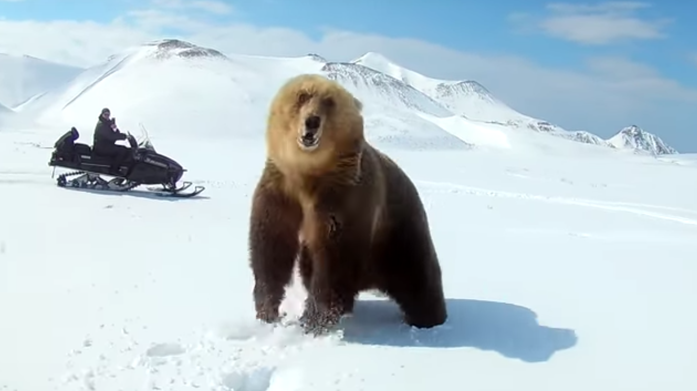 Snowmobiler Barely Avoids Serious Injury While Chasing a Bear